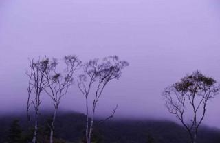 朝霧の中1
