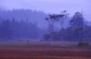 朝霧の中2