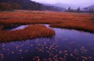 尾瀬の秋1