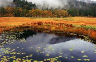 尾瀬の秋2
